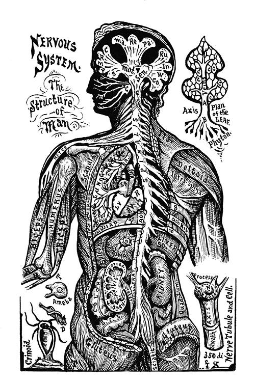 Image description: antiquated illustration of the nervous system