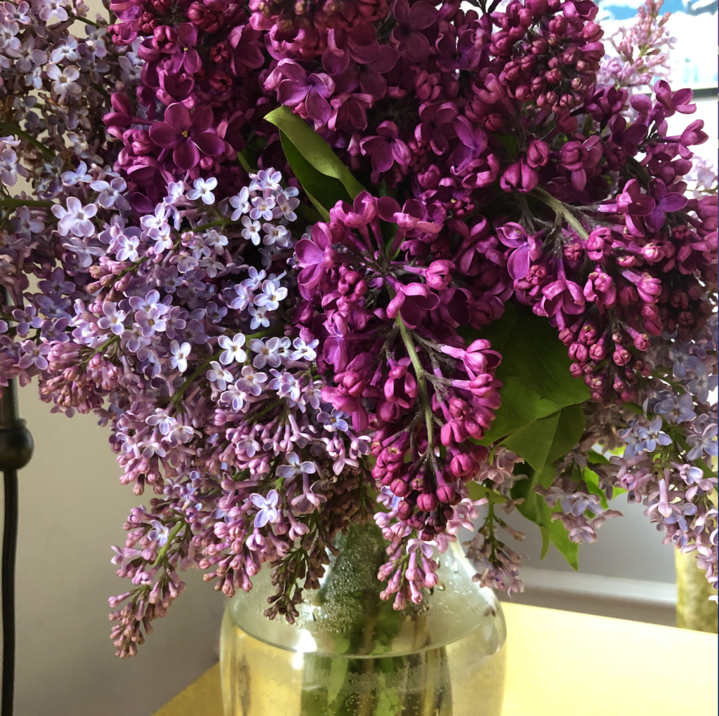 light and dark purple lilacs in glass vase